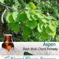 Aspen Flower Remedy