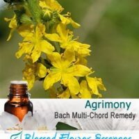 Agrimony Flower Remedy