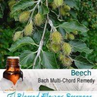 Beech Flower Remedy