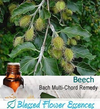 Beech Flower Remedy (Blessed Flower Essences Brand)