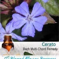 Cerato Flower Remedy