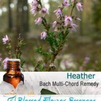 Heather Flower Remedy
