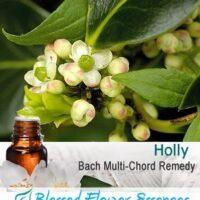 Holly Flower Remedy
