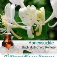 Honeysuckle Flower Remedy