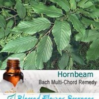 Hornbeam Flower Remedy