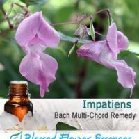 Impatiens Flower Remedy