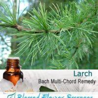Larch Flower Remedy