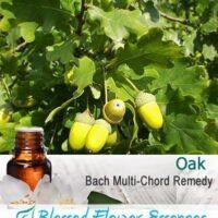 Oak Flower Remedy