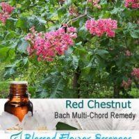 Red Chestnut Flower Remedy