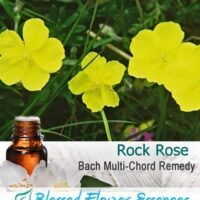 Rock Rose Flower Remedy