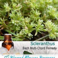 Scleranthus Flower Remedy