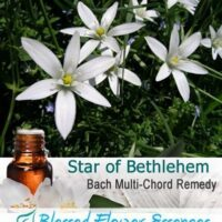 Star of Bethlehem Flower Remedy