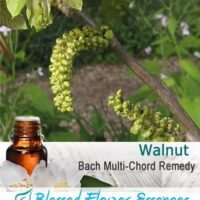 Walnut Flower Remedy