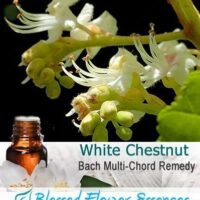 White Chestnut Flower Remedy