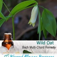 Wild Oat Flower Remedy