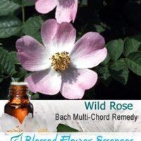 Wild Rose Flower Remedy