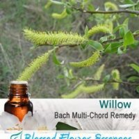 Willow Flower Remedy