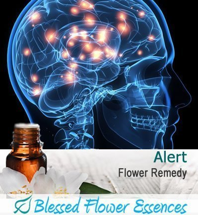 Alert Flower Remedy for ADD ADHD, Attention Span & Concentration