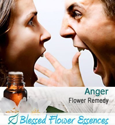 Anger Flower Remedy (Blessed Flower Essences Brand)
