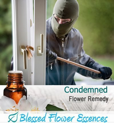 Condemned Flower Remedy (Blessed Flower Essences Brand)