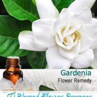 Gardenia Flower Remedy