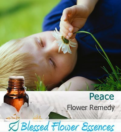Peace Flower Remedy (Blessed Flower Essences Brand)