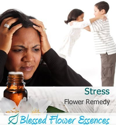 Stress Flower Remedy (Blessed Flower Essences Brand)
