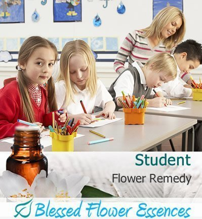 Student Flower Remedy (Blessed Flower Essences Brand)