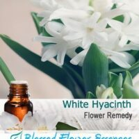 White Hyacinth Flower Remedy