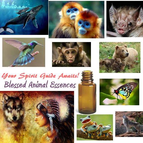 Blessed Animal Essences Image