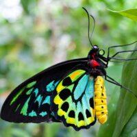 Butterfly Animal Essence