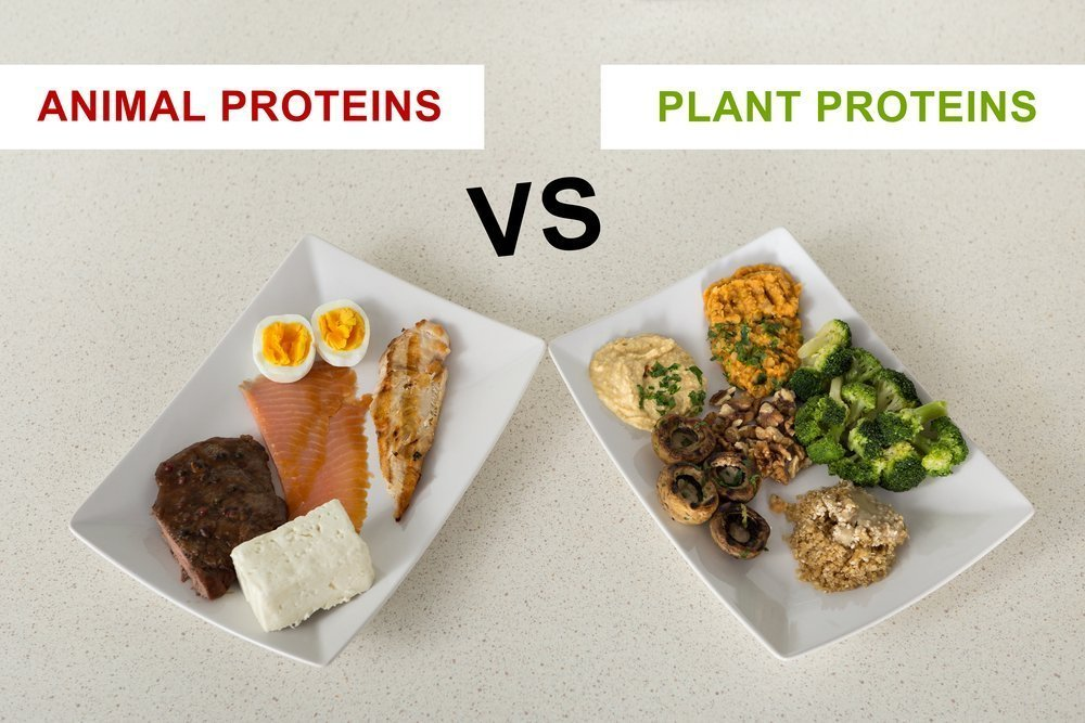 Protein & Amino Acids