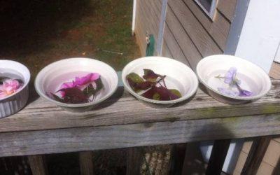 Happiest Spirit When Making Flower Essences!